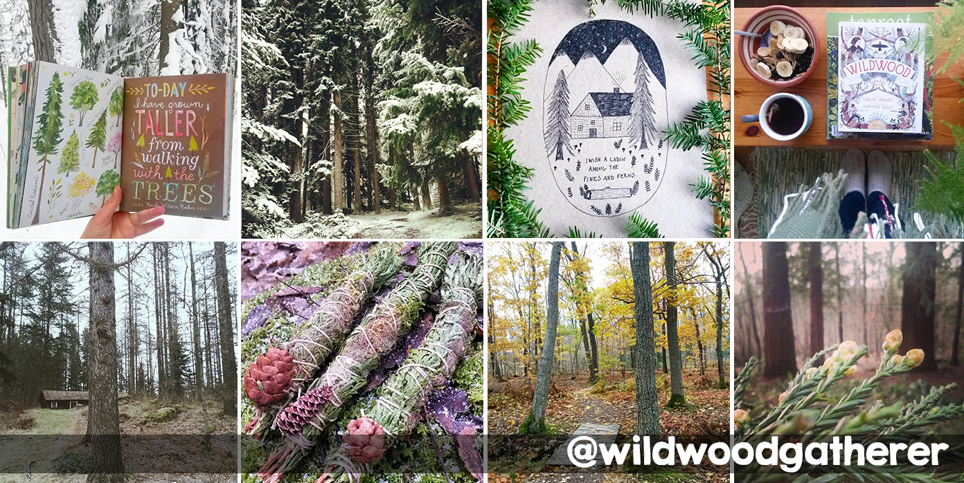 Instagram mágico da @wildwoodgatherer, uma garota na floresta.